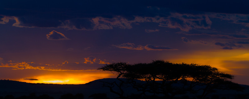Silhouette of trees - East Africa - Tanzania