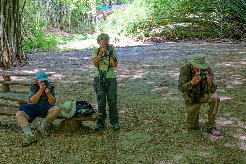photographing a toad, Lancetilla Botanical Gardens, Tela Honduras