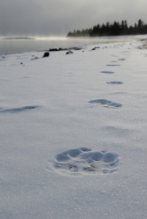 Winter Scenes (Click photo to see more)
