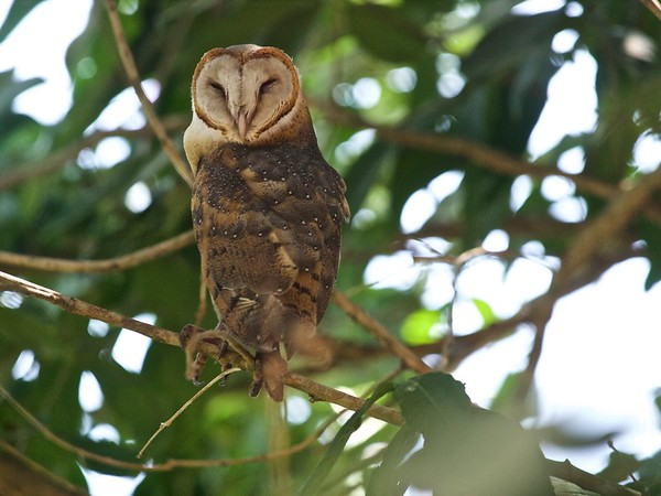 Our Owl