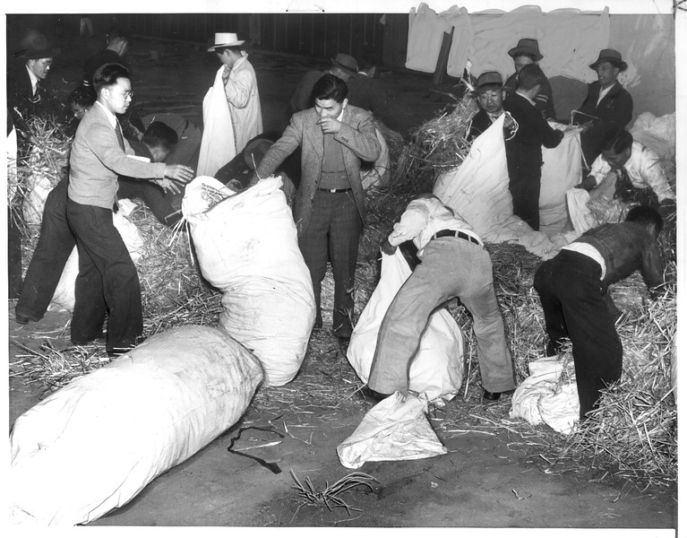 """""""Using straw, these Japs build mattresses for their use at the camp in the Owens River Valley.""""--caption on photograph"""