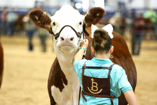 Polled Females
