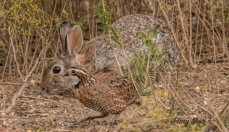 BunnyQuail LL_DWL0150.jpg