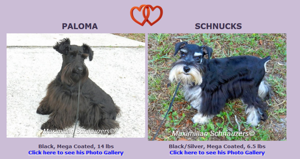 Paloma & Schnucks Puppies, DOB 9/10/2017