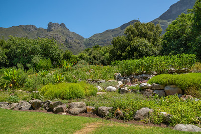 Kirstenbosch National Botanical_2013