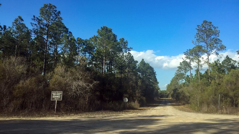 Tates Hell Forest Road junction