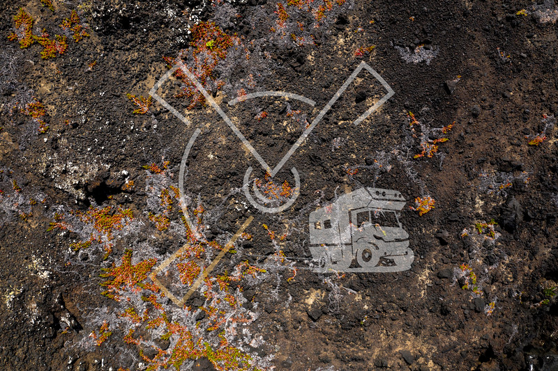 Aerial image showing colorful orange vegetation on a black lava beach at the westcoast of Faial Island, Azores