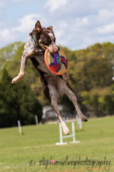_MG_2968Up_dog_International_2016_StephaniellenPhotography.jpg
