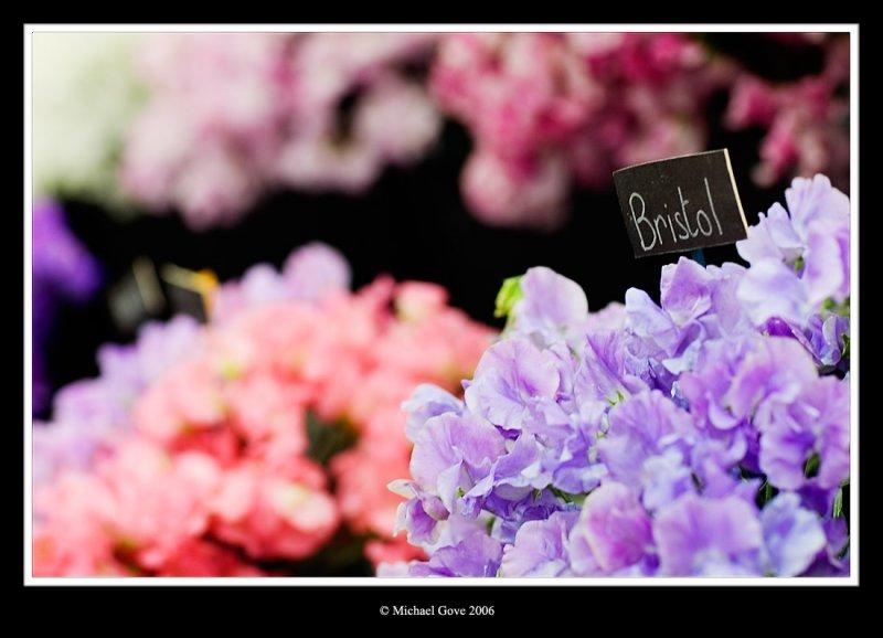 Blooming flower heads (65444491).jpg