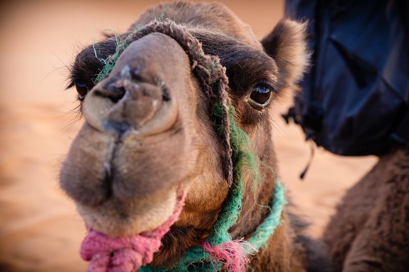 2017_Morocco_Sahara desert_genevievehathaway_srgb (45 of 47).jpg