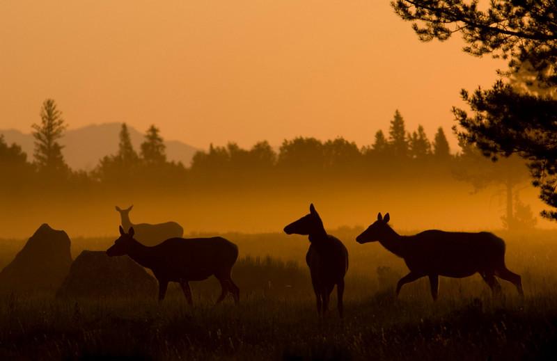 elk-sunrise5.jpg