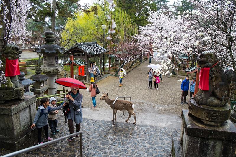 Nara Day 5 (85 of 374).jpg