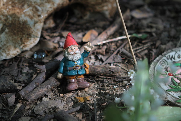 Zilker Fairy Garden :: June 18, 2016