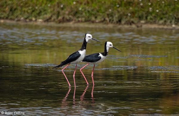 Pāuatahanui Wildlife Reserve 2021