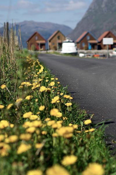 Langs veikanten. Foto: Geir