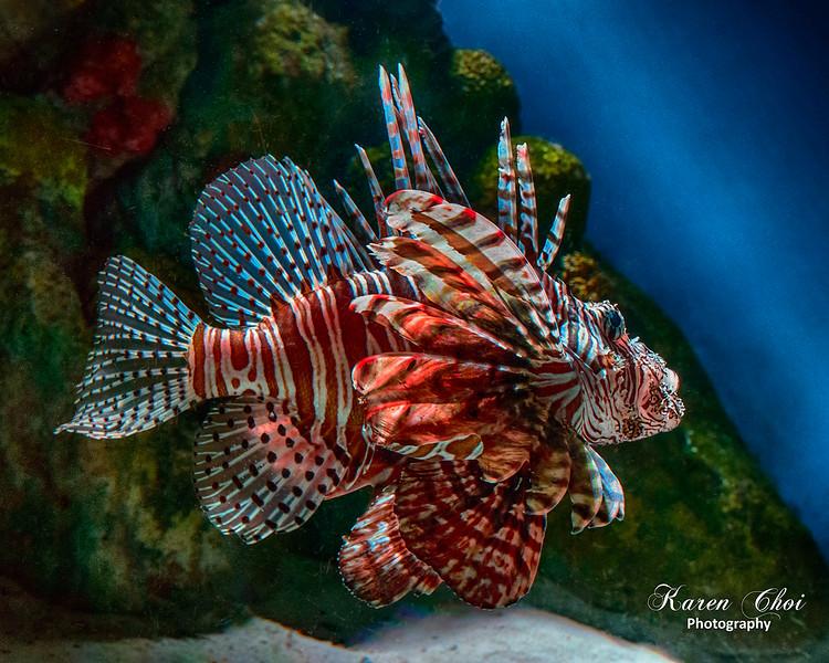 Lion Fish 1 sm.jpg