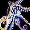Invertebrate Series: Octopus