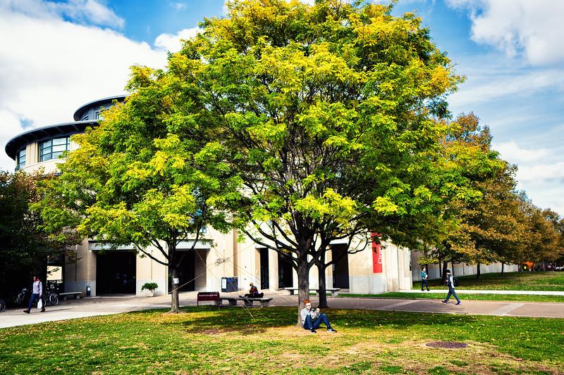 Sunny Spot Under the Tree