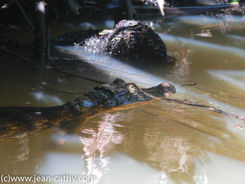 Costa Rica 2007_ (22 of 85)