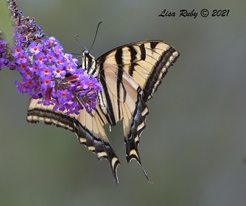 Bird & Butterfly Garden - 6/20/2021