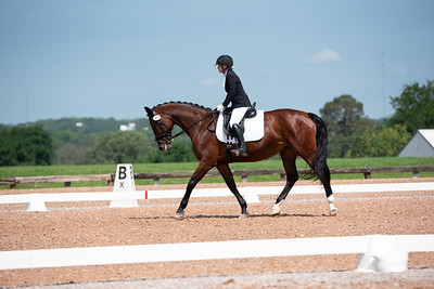Horse 403