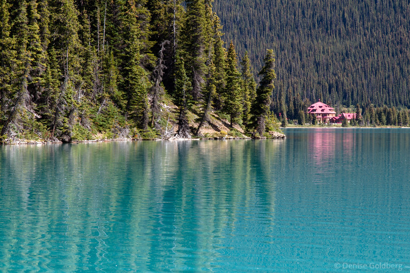 trees, reflecting in turquoise, Bow Lake