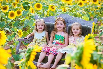 Michaels Sunflower Session