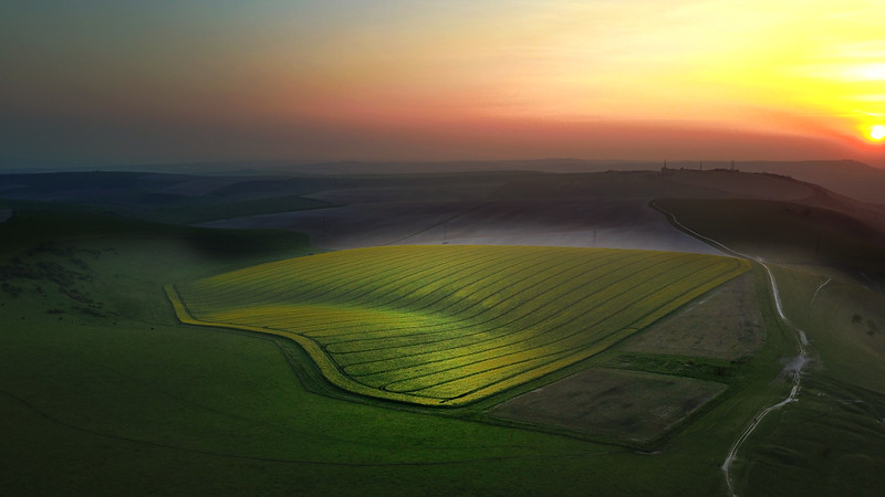 stock-photo-southdowns-206647379.jpg
