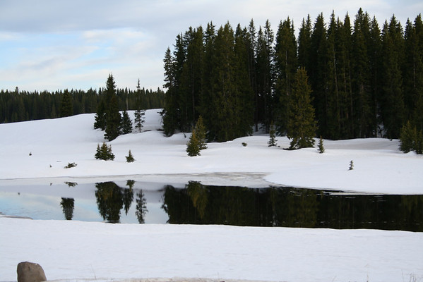GRAND MESA NATIONAL FOREST IN COLORADO IN LATE JUNE