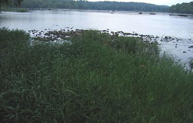 Harpers Ferry Endangered Species 2005