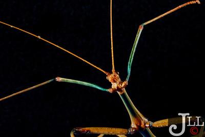 Insects/Arachnids - Studio