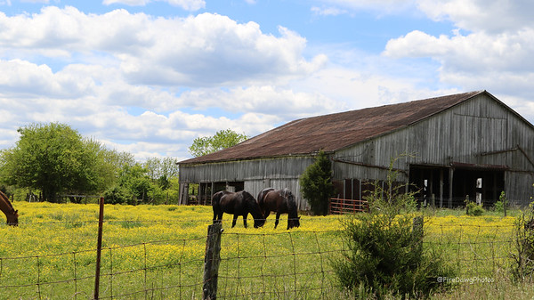 Barns & Country Scenes