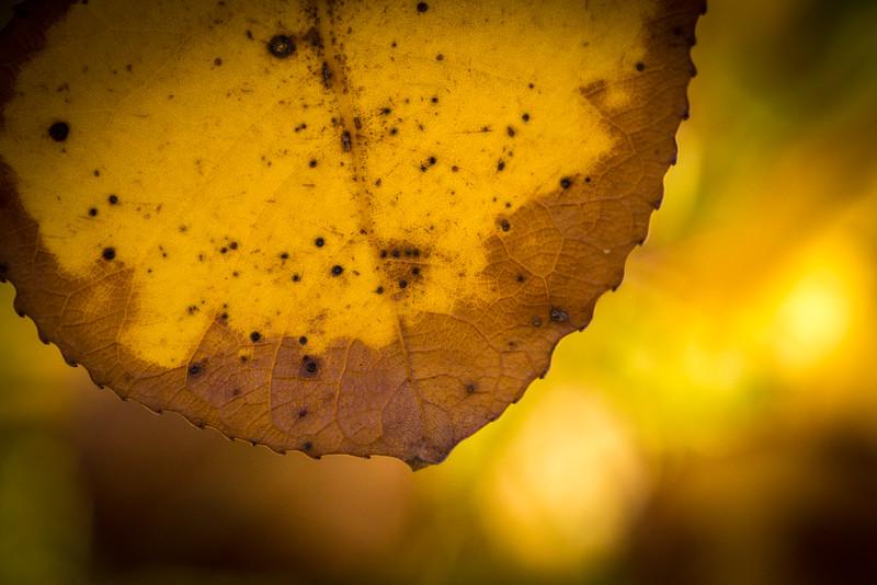 20151024-Fall Colors-35.jpg