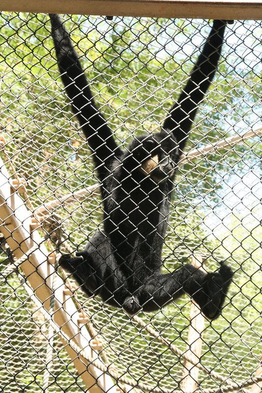 monkey on the fence.jpg