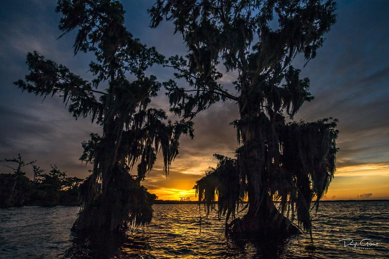 Blue Cypress Sunrise