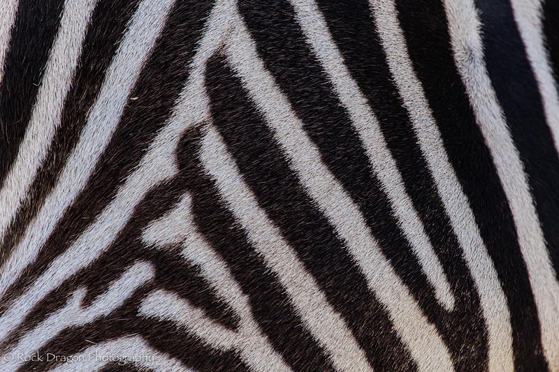 zoo_april_2012-15.jpg