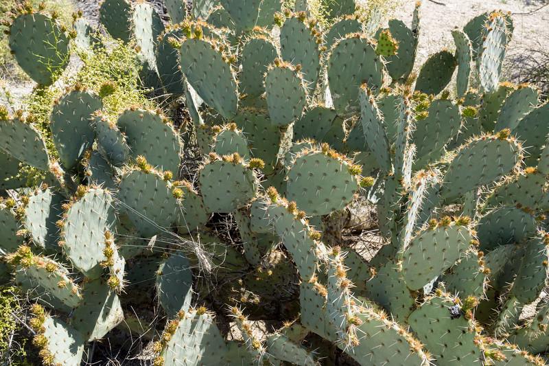 Mar 17 AZ-1050149.jpg