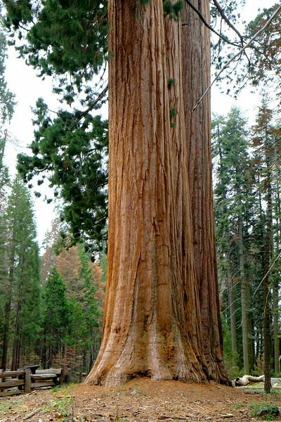 California Day 6 Sequoia 05-30-2017 48.JPG