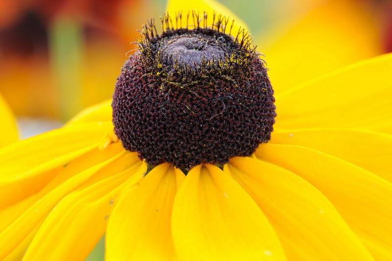 flowers_20080714-011.jpg