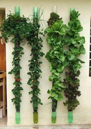 Garden_Inside_Lettuce.jpg