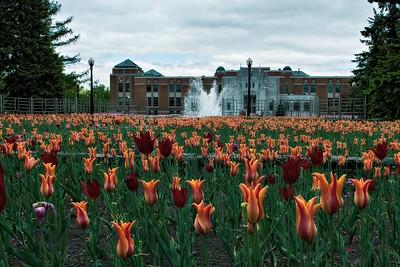 Montreal CA - Botanical Gardens