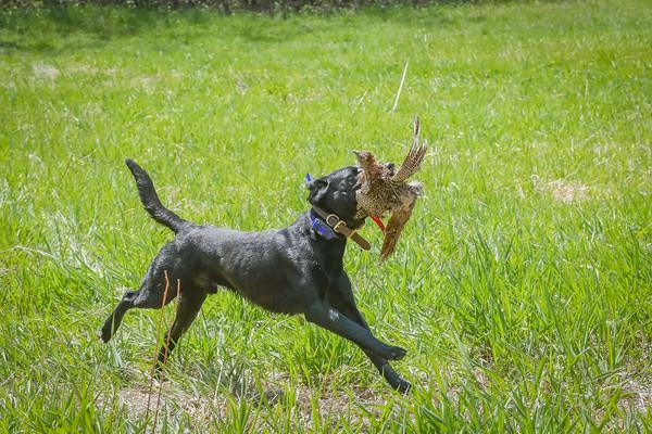 Top Dog Showdown 5-2020