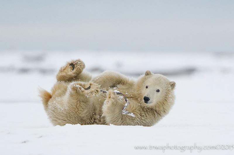 Wintery Fun