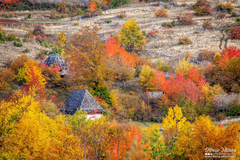 drasevo_jesen1.jpg