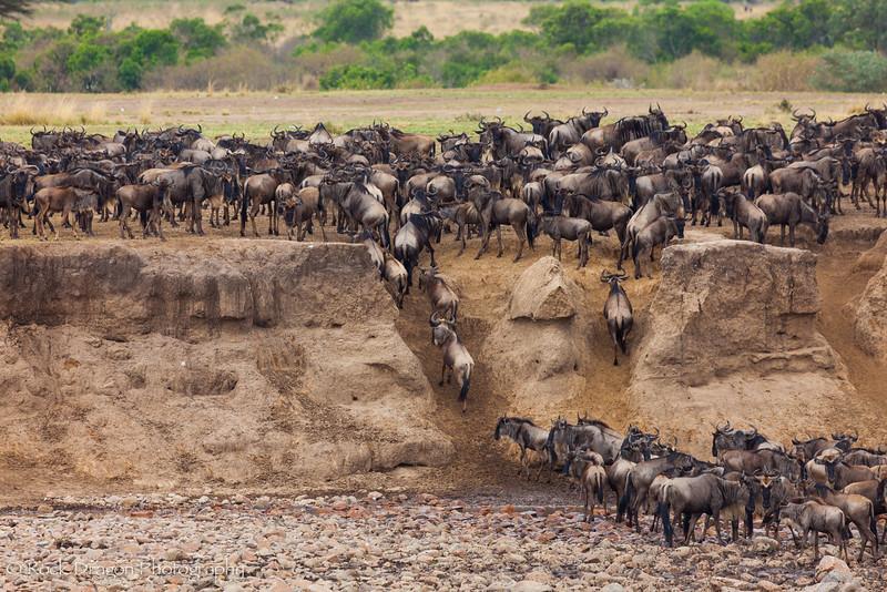 North_Serengeti-35.jpg
