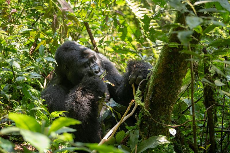 Uganda_T_Gor-210.jpg
