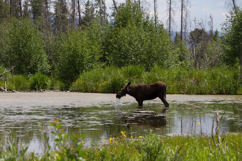 2011_07_05 Wyoming 137.jpg