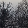 Taken Saturday January 5, 2013. I was around a mile away from this eagle. Taken with an 800mm equivalent lens. (500mm on a 1.6 sensor.)