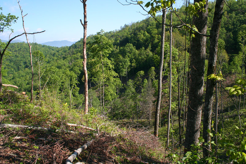 Looking down over clear cut (Note: some trees are left behind for regrowth)