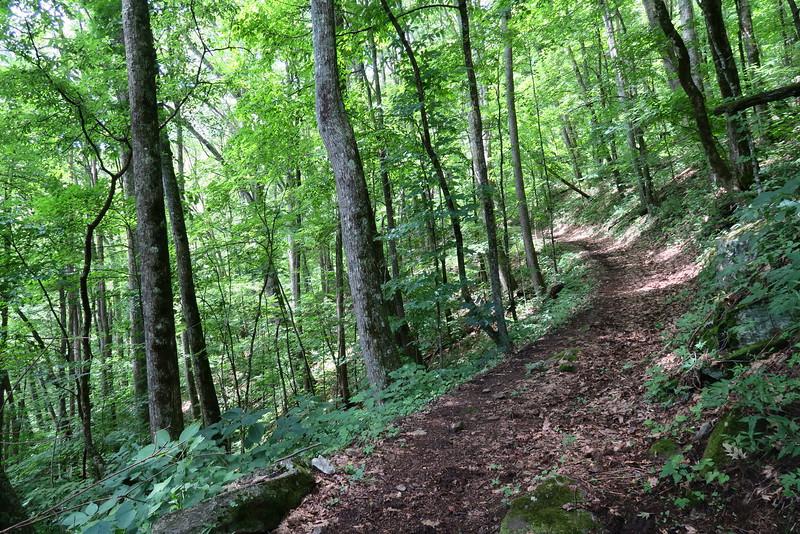 Hyatt Ridge Trail - 4,180'